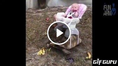 Tartaruga uber de bebês??
