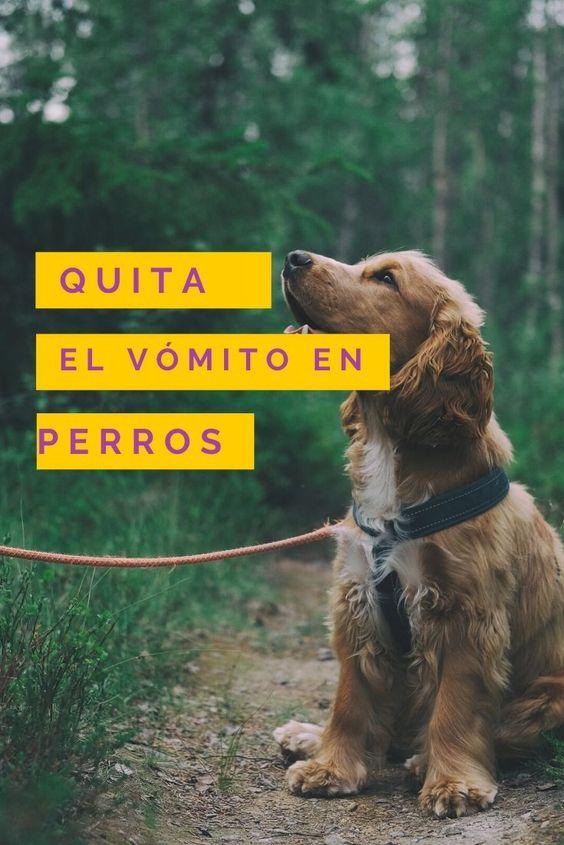 remedios caseros para el vómito en perros