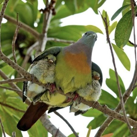 One of the stages of mothering :)