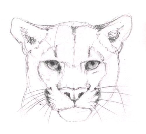 Puma Zeichnen Anleitung Dekoking Com 1 Zeichnen Anleitung Katze
