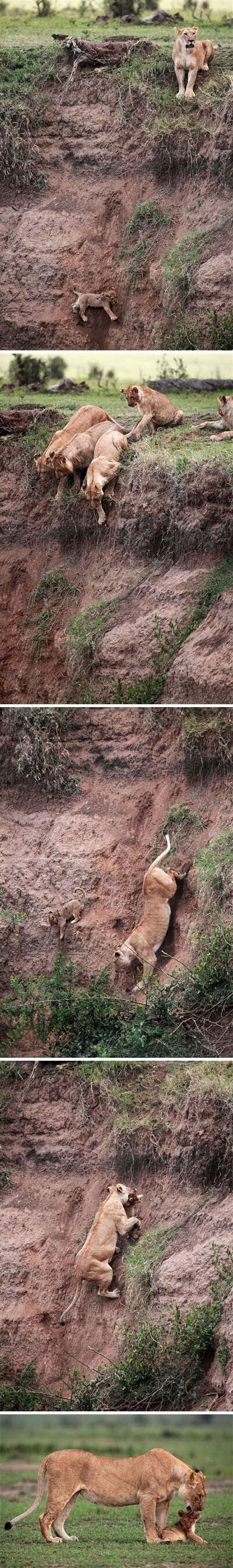 A Mother's Love   Photos from MSNBC via Animal Tracks Photos by Jean-Francois Lagrot / Sax Rohmer Ltd