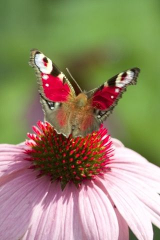 spring time butterfly.