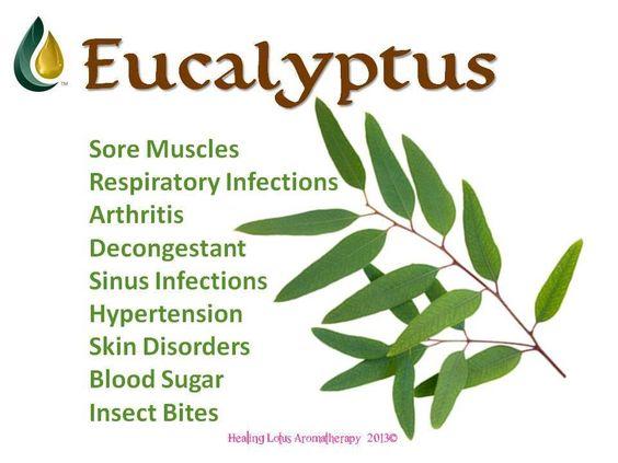 Young Living Essential Oils: Eucalyptus