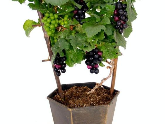 Unusual plants wine glass and to grow on pinterest Weird plants to grow indoors