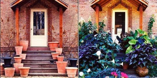 Antes e Depois.... Bem cuidadas as plantinhas sempre nos agradecem desta forma, lindas e viçosas...