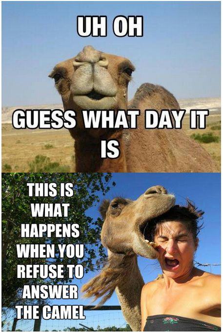 Funny Meme Wednesday : Hump day camel meme quotes quote days of the week