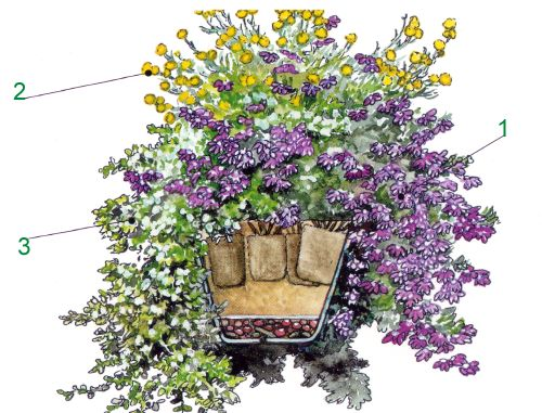 Hängepflanzen in der Blumenampel, Pflanzanleitung Blumenampel - blumenampel selber machen hangekorb