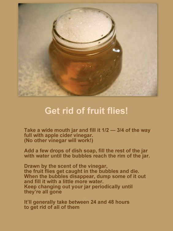 how to get rid of the fruit fly