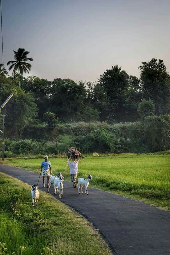 Pin By Sriram Kavala On God S Own Country Rural Landscape Nature Photography Village Photography