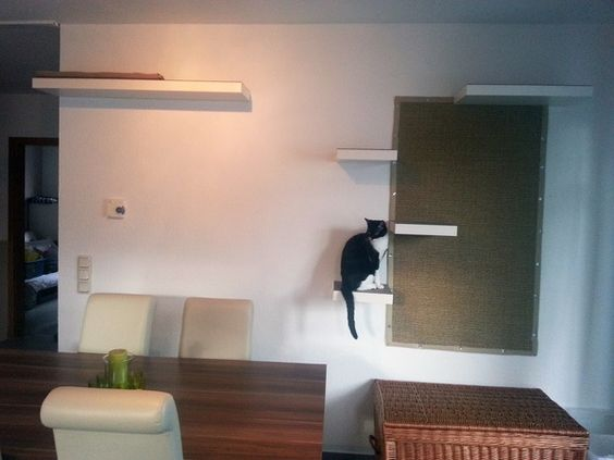 katzenauge an der wand super sisal teppich als kratzwand for future kitty. Black Bedroom Furniture Sets. Home Design Ideas