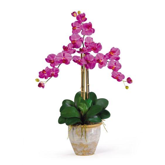orchidee bedeutung die schönsten zimmerpflanzen