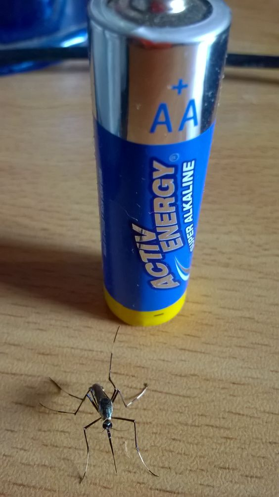 The diameter of that battery base is 1.5cm. Mobile phone pic.