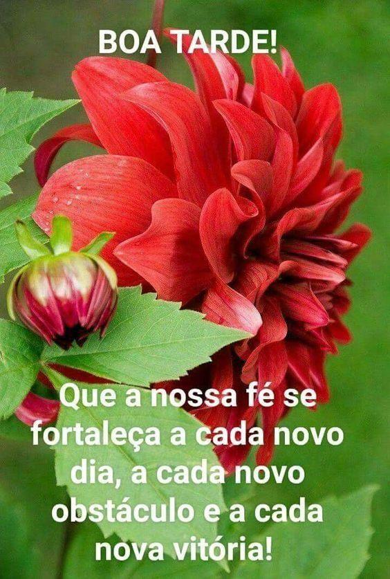 13 Imagens de boa tarde para whatsapp status e story - Amaluz.com.br |  Imagens de boa tarde, Boa tarde, Boa tarde com flores