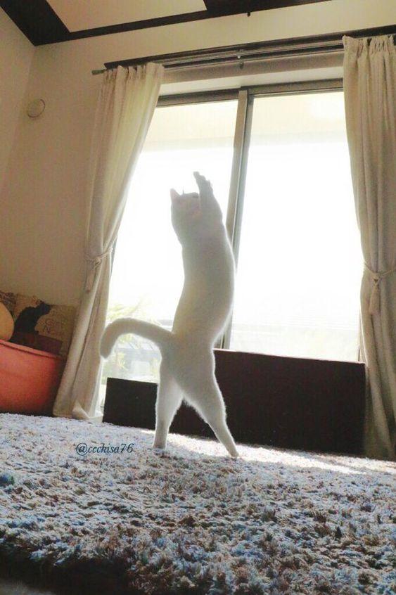 日本の猫が世界中のインターネットユーザーの心を釘付に:キニ速