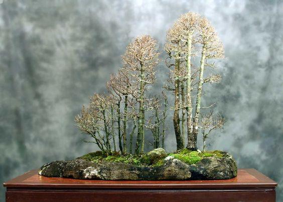 Amazing Bonsai Forest
