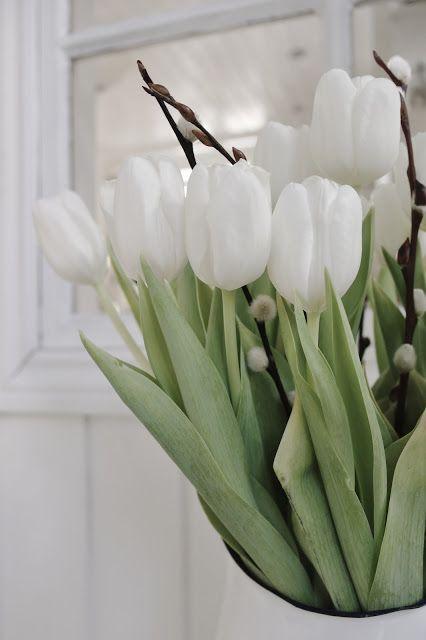 witte tulpen met katjes