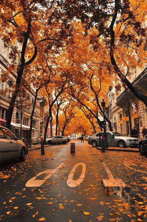"""C'est une belle petite rue sous un """"ciel"""" orange de feuilles automnales. J'adore cette photo, car ça me rend calme et contente.   : )"""
