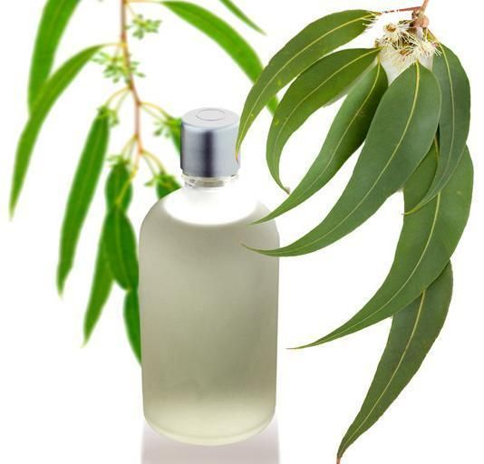 Eucalyptus Or Pine Oil