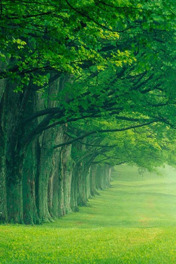 Galleria di alberi