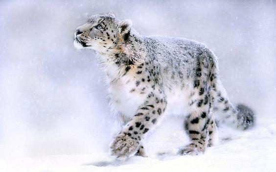 ¿Sabes cómo se llama esta especie animal? Se trata de una de las 10 en peligro de extinción