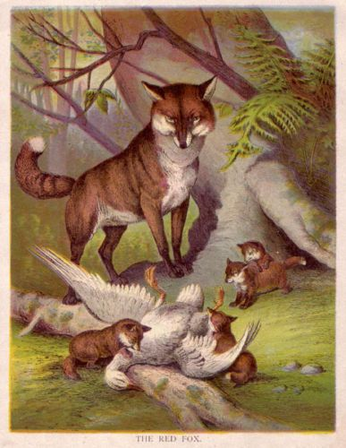 FOX Vixen & Pups with Goose, Antique 1880s