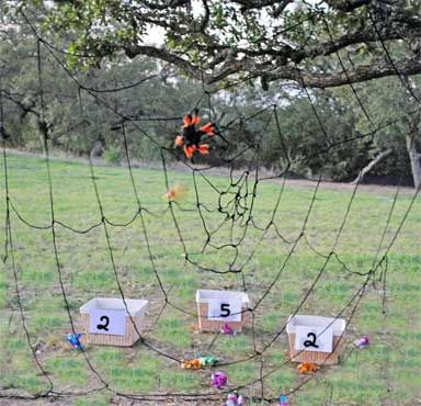 Spider Trap Game.  The object of the game is to throw stuffed bugs through the web into one of the buckets and don't let the spider trap the bugs.