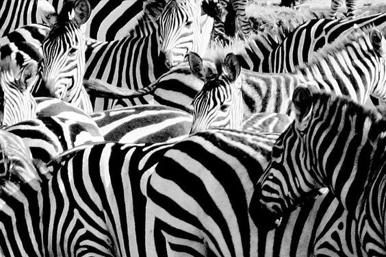 Barcodescanner für Zebras