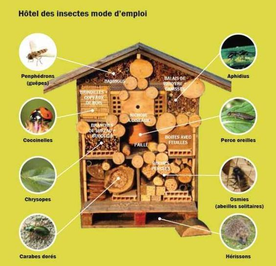 Tags and h tels on pinterest - Hotel a insecte ...