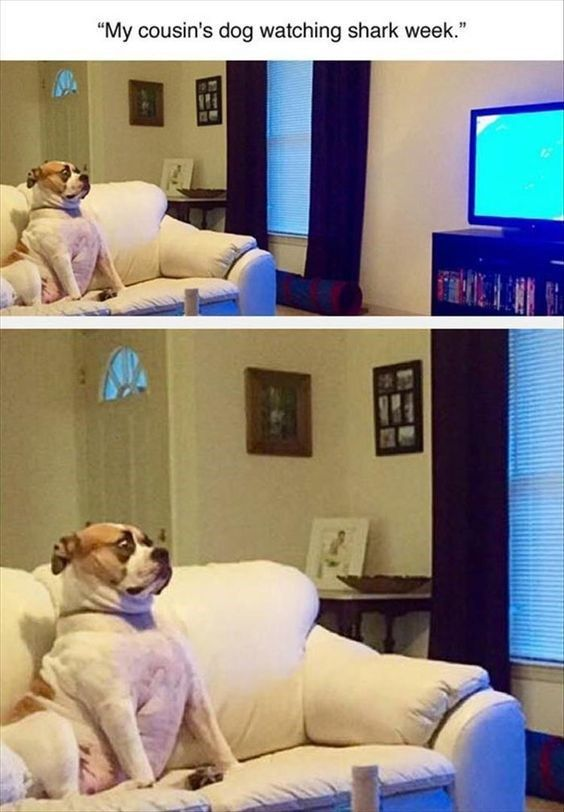 16 Expressions Of Scared Animals That Will Make You Just Laugh