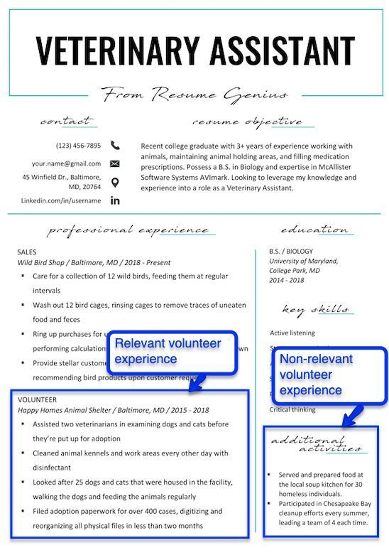 How To Put Volunteer Work On Your Resume Veterinary Assistant Volunteer Experience Example Resume Job Resume Examples Resume Examples Good Resume Examples