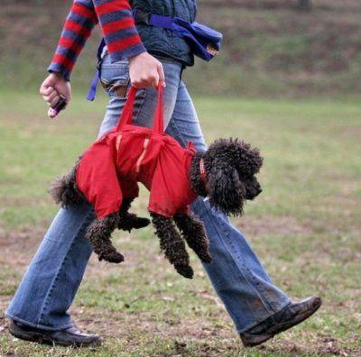 On connait tous les sac à crotte pour nos amis les toutous, afin de ramasser les déjections, maintenant voilà le sac à chien !! Si vous souhaiter promener votre chien à votre rythme !! lol