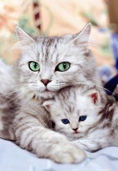 Gata mãe mais linda  protegendo seu filho
