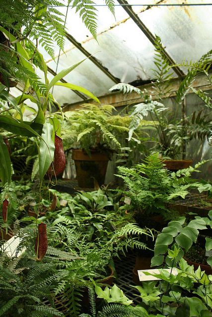 I shall have you someday, perilously overgrown greenhouse