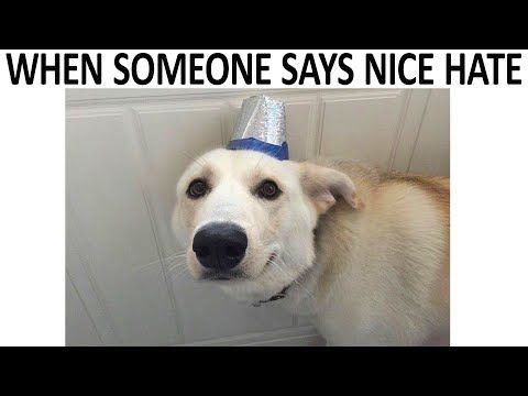 Best Wholesome Memes For A Bad Day V8 Youtube Funny Memes Morning Humor Wholesome Memes