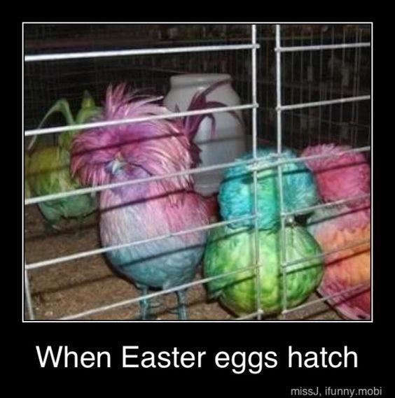 Wenn Ostereier schlüpfen...