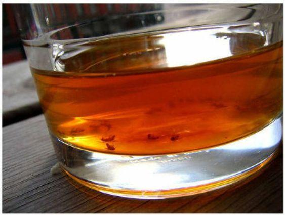 Imagen 03 Si teméis por la existencia de pulgas en la alfombra, un bol de vinagre encima de la misma durante la noche las atraerá y matará.