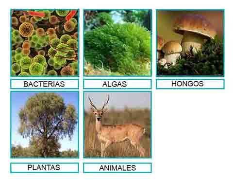 hongos y algas