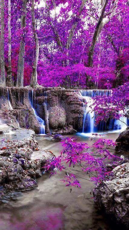 Жакаранда - фиалковые деревья и водопад