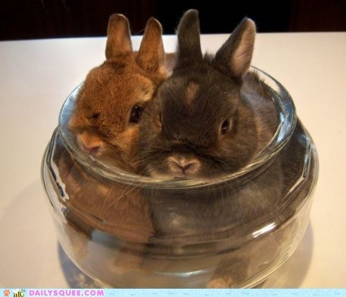Fresh bunnies