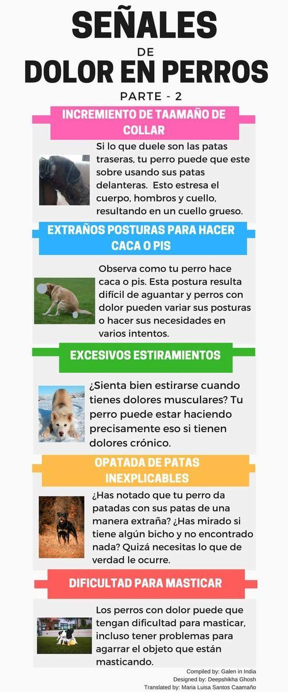 Cuidados Decuidados Para Mascotas Como Cuidar Una Mascota Cuidados Basicos Para Mascotas Animales Para Niños C Dog Business Dog Training Obedience Dog Care