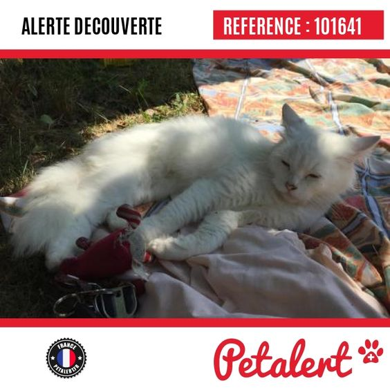 07.09.2016 / Chat / Pagny-sur-Moselle / Meurthe-et-Moselle / France