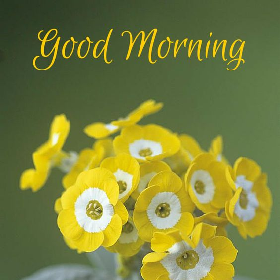 34 Good Morning Cards to Make your Day! | Cards to make, Good ...