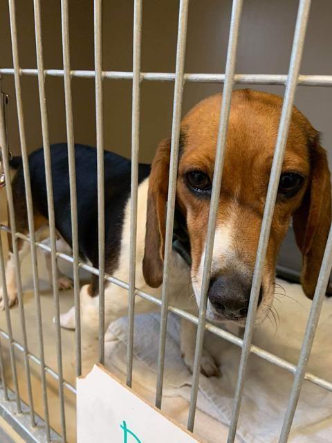 Adopt Plum A 34 Adopted On Pet Adoption Cute Animal Photos Pets
