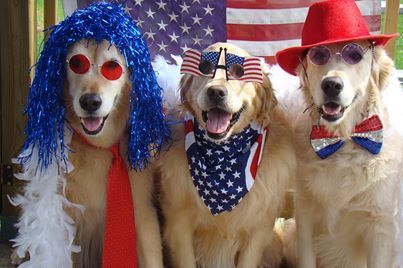 Addie Comfort Dog - This picture is my all time very favorite Fourth of July photo! Totally PAWESOME!! All 3 pups smiling in our photo shoot redo today and we borrowed a neighbors American Flag :) Happy July 4th ...be Safe and Enjoy ? Tyler, Brie, Bentley and their Mommy Sandy (Facebook via K-9 Parish Comfort Dogs from Tyler, Brie, Bentley and their Mommy Sandy)