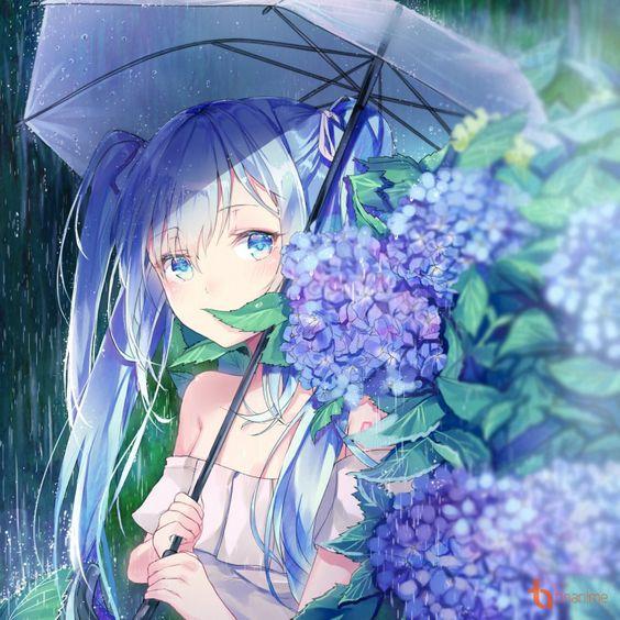 [Tác phẩm nghệ thuật] Cẩm tú cầu mưa mùa!