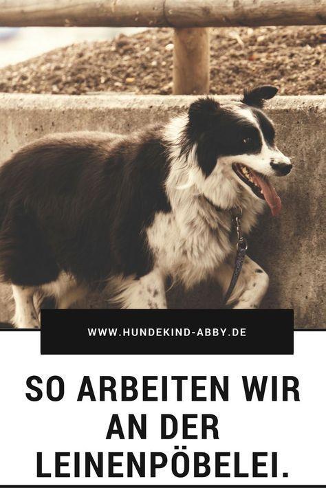 10 Pro Tips For Dog Training By Experts Mit Bildern Hunde