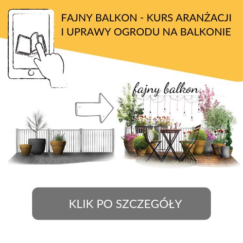 Rosliny Na Cienisty Balkon Moich 15 Typow Fajneogrody Pl Place Card Holders Place Cards