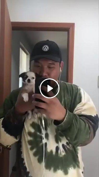 Cachorrinho adora tira foto no espelho