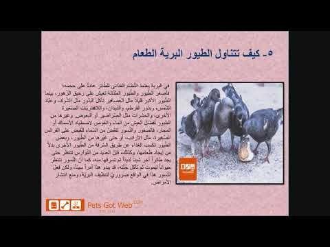 بيتس جوت ويب تقدم ماذا تأكل الطيور Petsgotweb Book Cover Pets Books