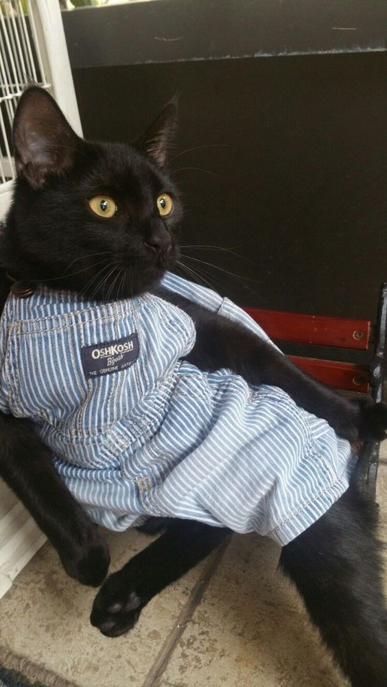 60 Cats All Dressed Up And Ready For The Catwalk | CutesyPooh
